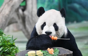 Giant pandas enjoy mooncakes, skewered fruits, vegetables in Taipei