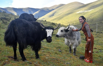 Yak milk ice cream brings more income to SW China's herdsmen