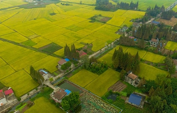 View of paddy fields in Yiyang, C China's Hunan