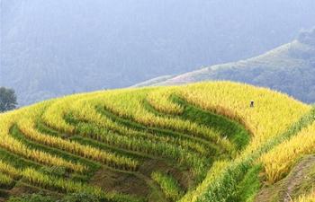 People celebrate harvest season across China