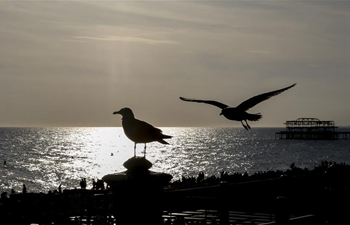 In pics: beach of Brighton in Britain