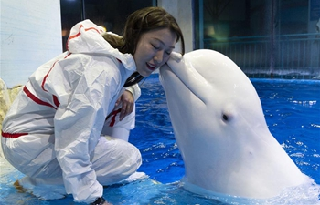 Pic story of trainer of beluga whale in Harbin, NE China's Heilongjiang