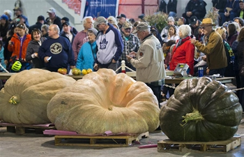 Giant Pumpkin Competition held in Ontario, Canada