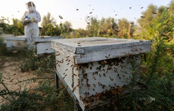 Pic story of female beekeeper in Gaza Strip