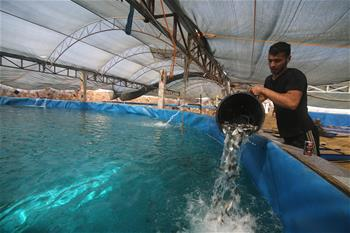 Palestinian workers feed fishes in Gaza Strip City of Khan Younis