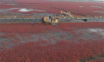 View of Honghaitan Red Beach scenic area in NE China's Liaoning