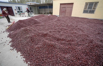 Ruoqiang County in China's Xinjiang famous for red jujubes