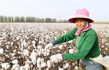 "In pics: ""Town of Cotton"" in NW China's Xinjiang"