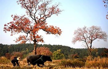 Autumn scenery of Dabieshan Mountain in Xinyang, China's Henan