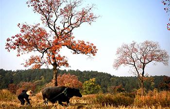 Autumn scenery of Dabieshan Mountain in Xinyang, China's Henan