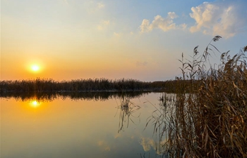 Autumn scenery of Hasuhai wetland during sunset in Hohhot, N China