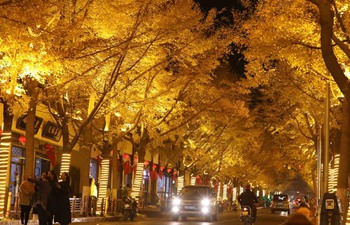 Beautiful scenery of gingko trees in China's Gansu