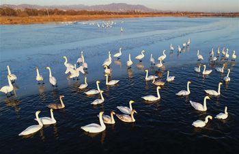 Guanting reservoir becomes transit place, habitat for migratory birds