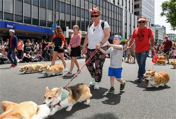 People participate in annual Christmas parade in Wellington, New Zealand
