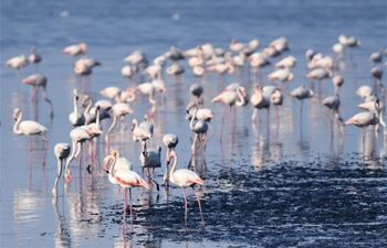 In pics: birds on beach of Kuwait City