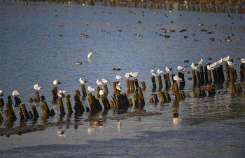 Migratory birds seen at Shenzhen Bay