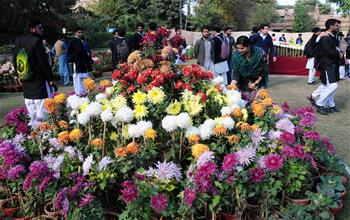 People visit chrysanthemum flower show in Pakistan's Peshawar
