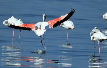 Birds seen on beach of Kuwait City