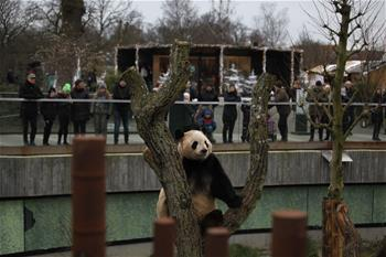 Tourists look at giant panda at Copenhagen Zoo in Denmark