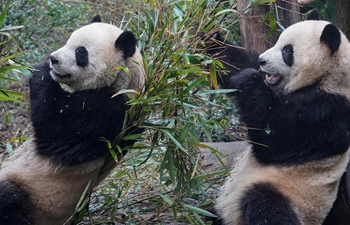 Tourists come to see giant pandas during New Year holiday