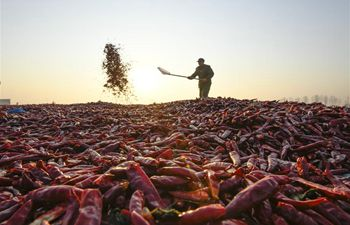 Farmers air chili peppers at Huanglin Village in N China's Hebei