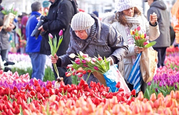 Netherlands' National Tulip Day held in Amsterdam