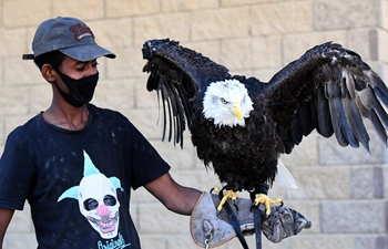 Raptor show held in Kuwait