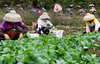 Haikou City guides vegetable production bases, farmers to ensure supply