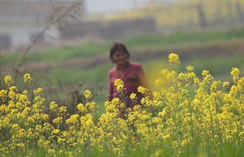 Scenery of cole flower field in Bhaktapur, Nepal