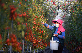 Villagers busy with spring ploughing in east China's Jiangxi
