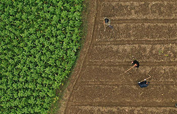 Villagers busy with agricultural production across China