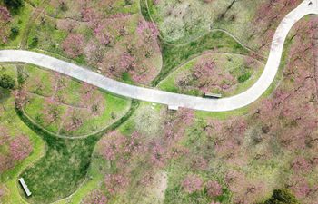 Plum blossoms in ecological garden in Shanghai