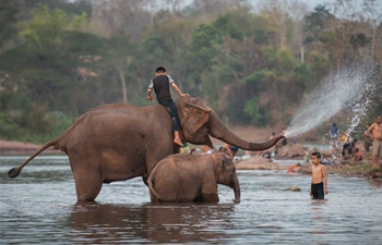 Elephant Festival held in northern Lao province of Xayaboury