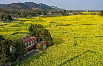 In pics: cole flower fields in Sichuan