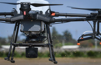 Drones used to sow rice seeds in Kaiping, S China