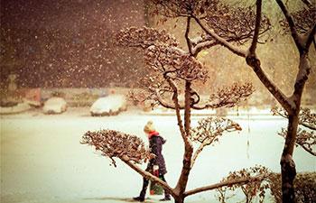 Snowfall hits NE China's Harbin