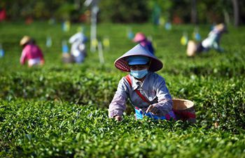 Workers harvest spring tea after resumption of work in Hainan