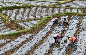 Agricultural production underway in Guizhou