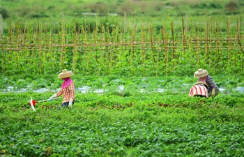 Farmers across China busy with farm work