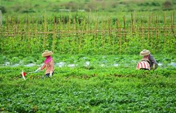 Farmers across China busy with farm work