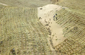 Locals start spring anti-desertification work in Gulang, Gansu