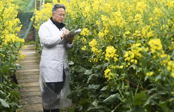 Agricultural experts make research work in Chongqing