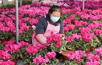 Farmers in Hebei orderly resume work in greenhouses