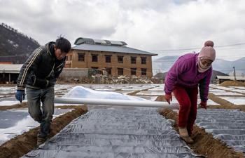 Farmers work in field in Shangri-La, SW China