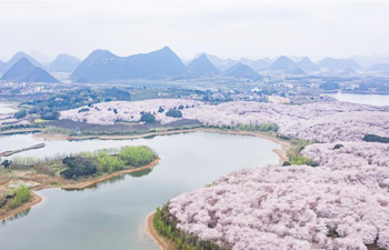 Scenery of cherry blossoms in Guian New District, SW China