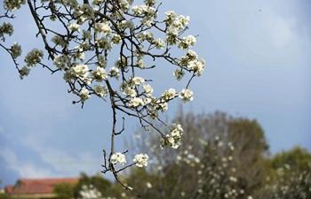 Flowers bloom as temperature rises in Pakistan