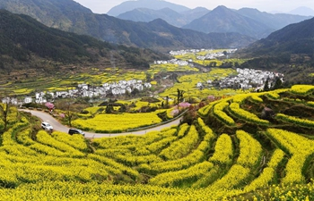 In pics: cole flower field scenery in Wuyuan, Jiangxi