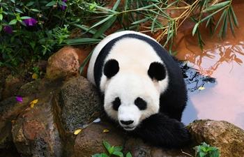 """In pics: giant panda """"Gong Gong"""""""