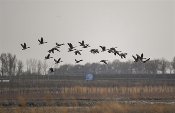 In pics: migrant birds at Wolong Lake wetland in Liaoning