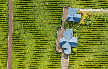 Scenery of tea garden in Guiyang